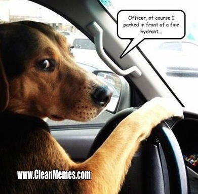 Gag Memes And Xf When You Re In The Backseat Desperately
