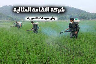 شركة رش مبيدات بالنعيرية 0531390740
