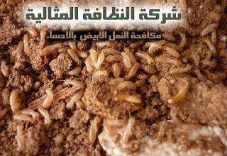 مكافحة النمل الابيض بالاحساء شركة مكافحة النمل الابيض بالاحساء شركة مكافحة النمل الابيض بالاحساء 0531390740 Termite control Company Ahsa