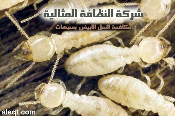 شركة مكافحة النمل الابيض بسيهات 0531390740