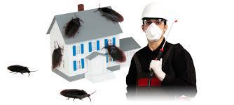 شركة مكافحة حشرات براس تنورة
