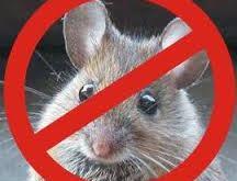 شركات مكافحة الفئران بالدمام
