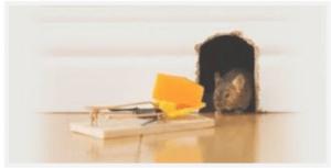 شركة مكافحة الفئران بالدمام. شركة مكافحة الفئران بالدمام 0531390740
