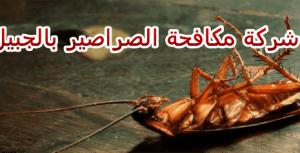شركة مكافحة الصراصير بالجبيل
