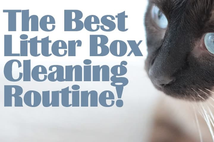 The Best Litter Box Cleaning Routine Clean My Space