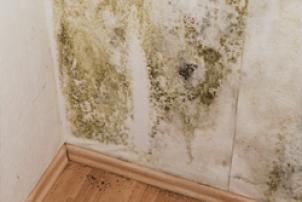 disaster restoration mold damage - Hidden Leaks