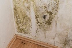 mold damage disaster restoration
