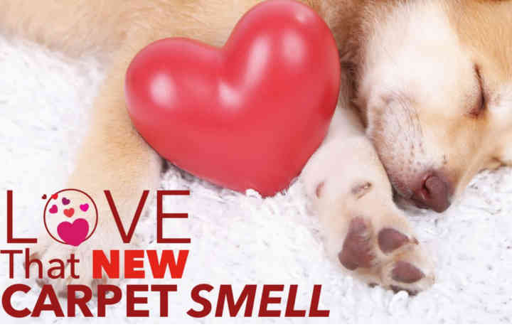 Love that New Carpet Smell
