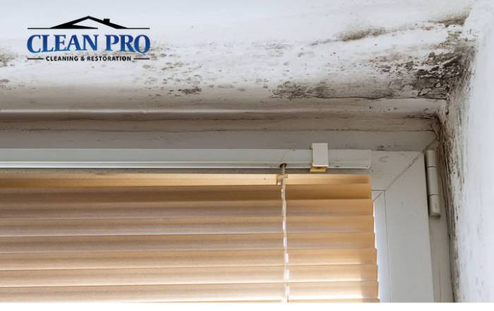 Mold Remediation - Clean Pro Cleaning