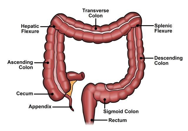 best colon cleanse, colon hydrotherapy