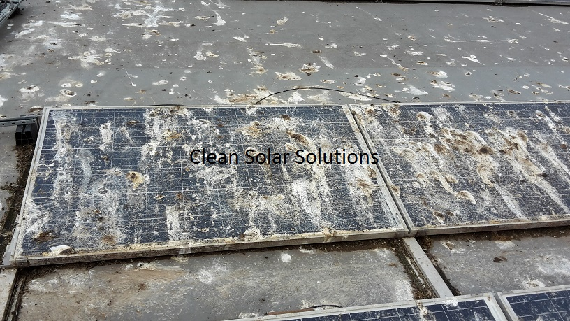 The Effects Of Bird Droppings Solar Panels – The Harsh Reality