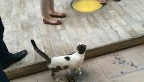 Masdar cat (energy efficiency)