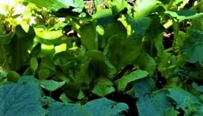 garden Cynthia Shahan