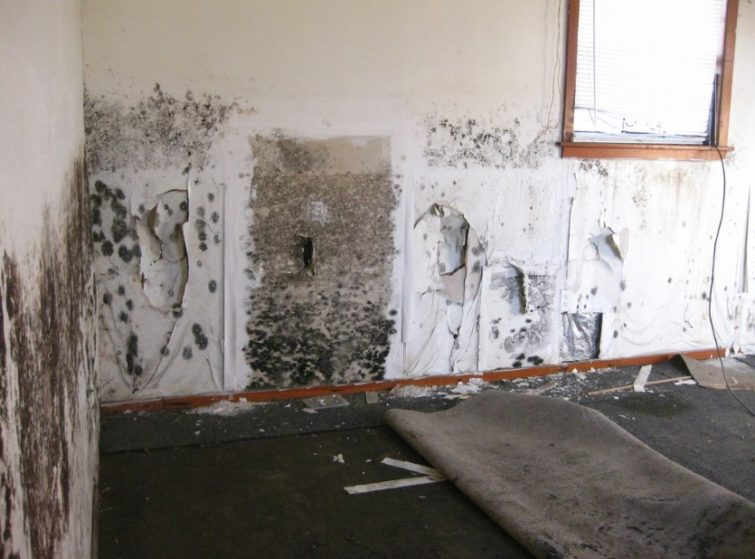 Legal Aspects Of Mold Contamination Clean Water Partners
