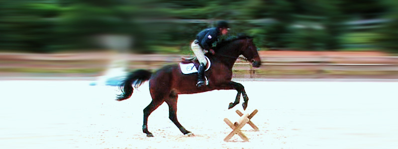 Showjumping training