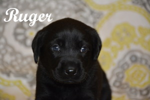 Ruger 4 weeks.