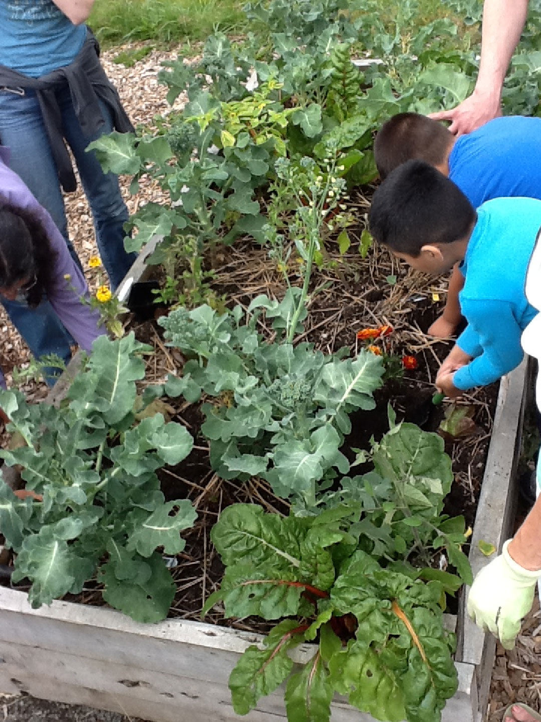 Integrating Stem And Sustainability Through Learning
