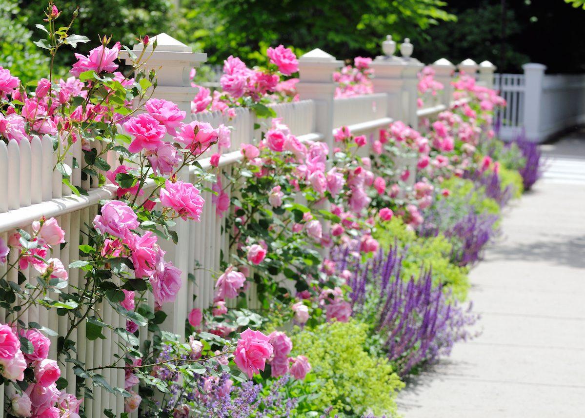 Cl turer son jardin faire le bon choix blog d co clem atc - Cloturer son jardin ...