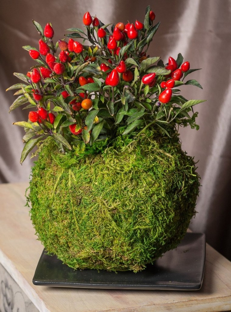 comment faire un kokedama plante originale rouge mousse plat noir - blog déco - clem around the corner
