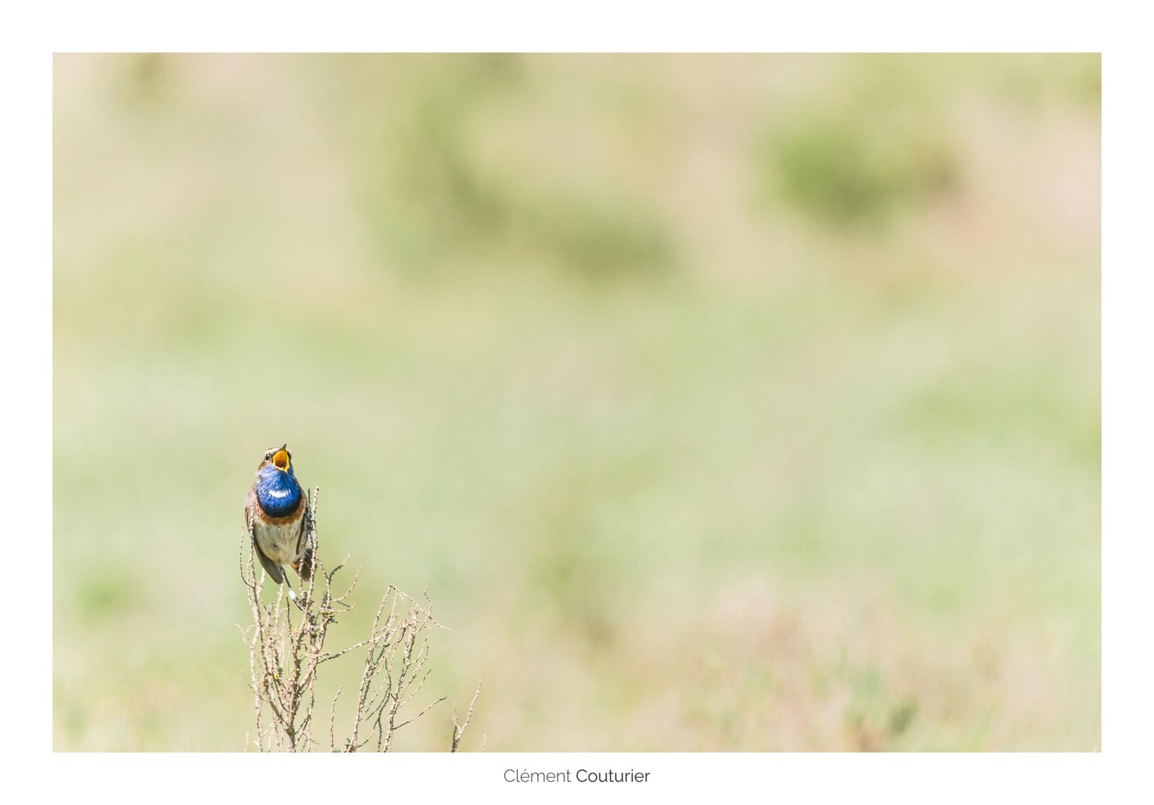 Gorge bleue à miroir - Clément Couturier