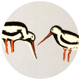 Oyster Catchers Motif by Clement Design
