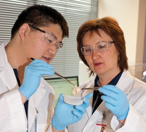 Assistant professor Agneta Simionescu works with graduate student James Chow in Clemson's Biocompatibility and Tissue Regeneration Laboratory.