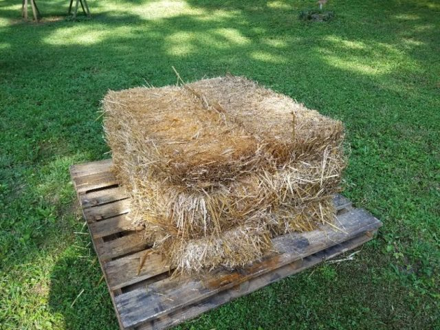 Bales placed on wooden pallets allows for drainage.