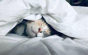 get a good night's sleep