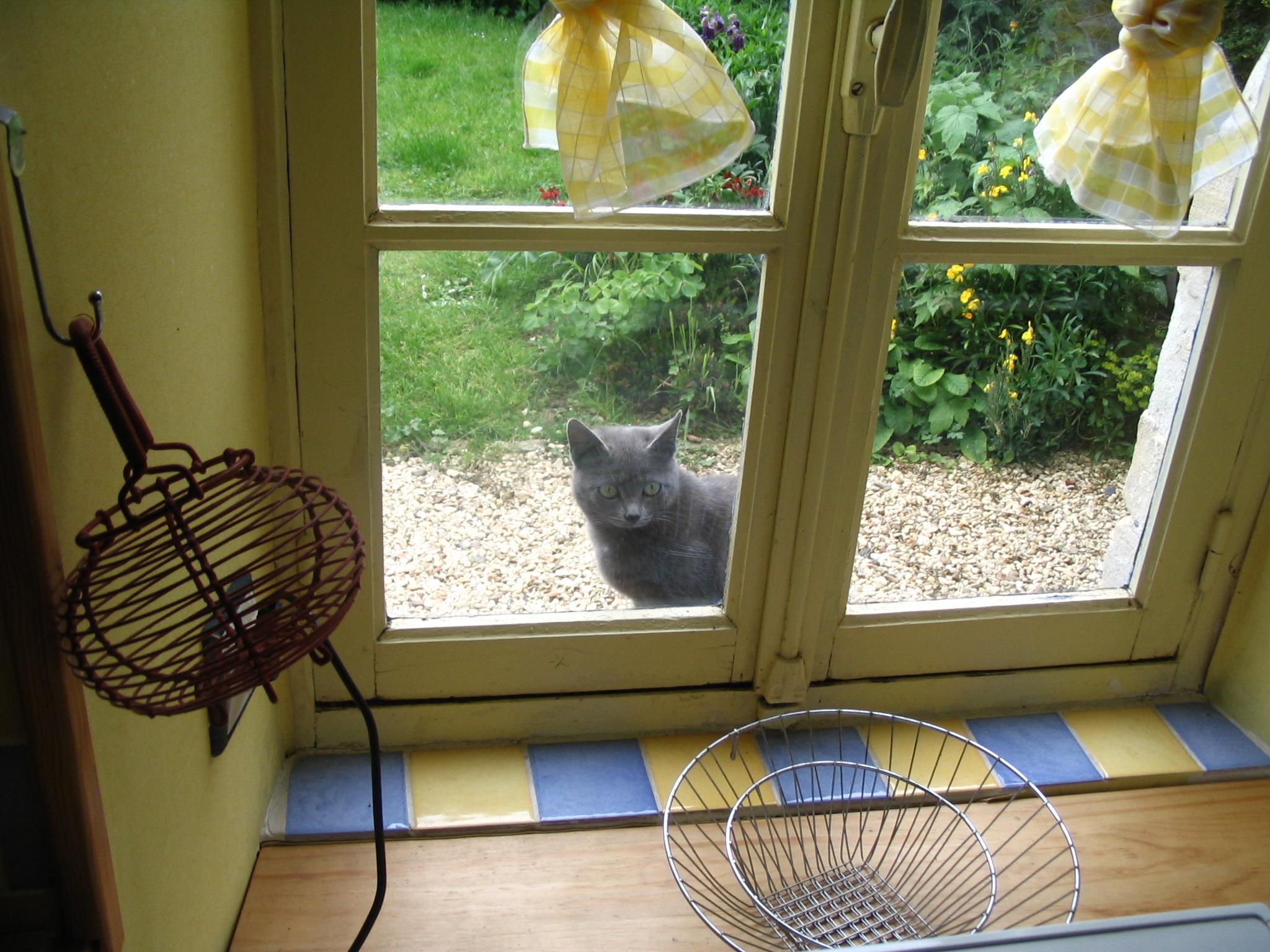 Gite in Normandy: cat