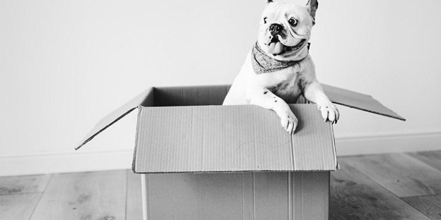 An Essential Guide For Managing A Move And A New Home When You Own Pets Cleveland Appraisal Blog
