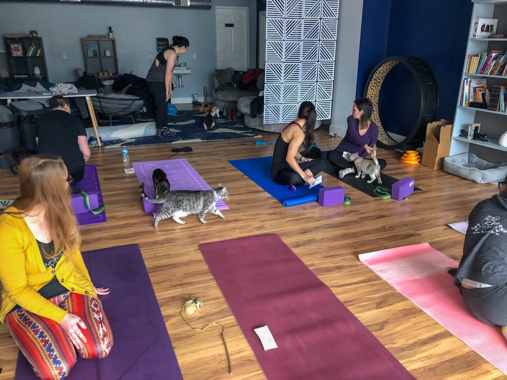 Cat yoga at AffoGATO cat cafe in Cleveland
