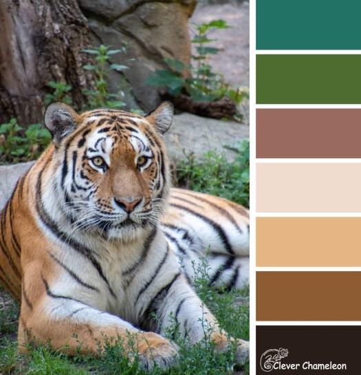 Tiger colour scheme at Clever Chameleon
