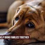 Can Having a Dog Can Improve Your Home Life