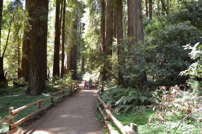 muir_woods_tall_trees