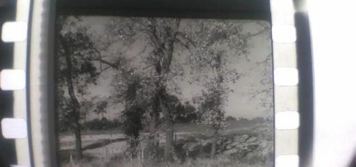 Restauro documentari del 1949 CliccaLivorno