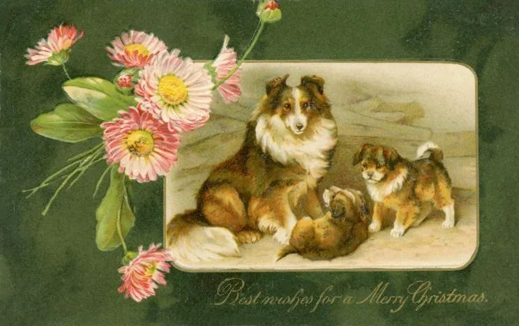 Christmas postcards with dogs