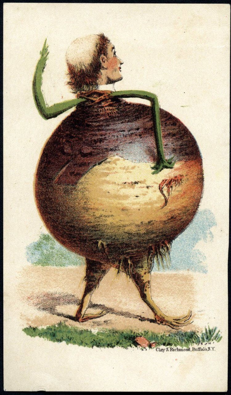 Trade cards with people as vegetables from the 1800s - Man's head on a turnip body