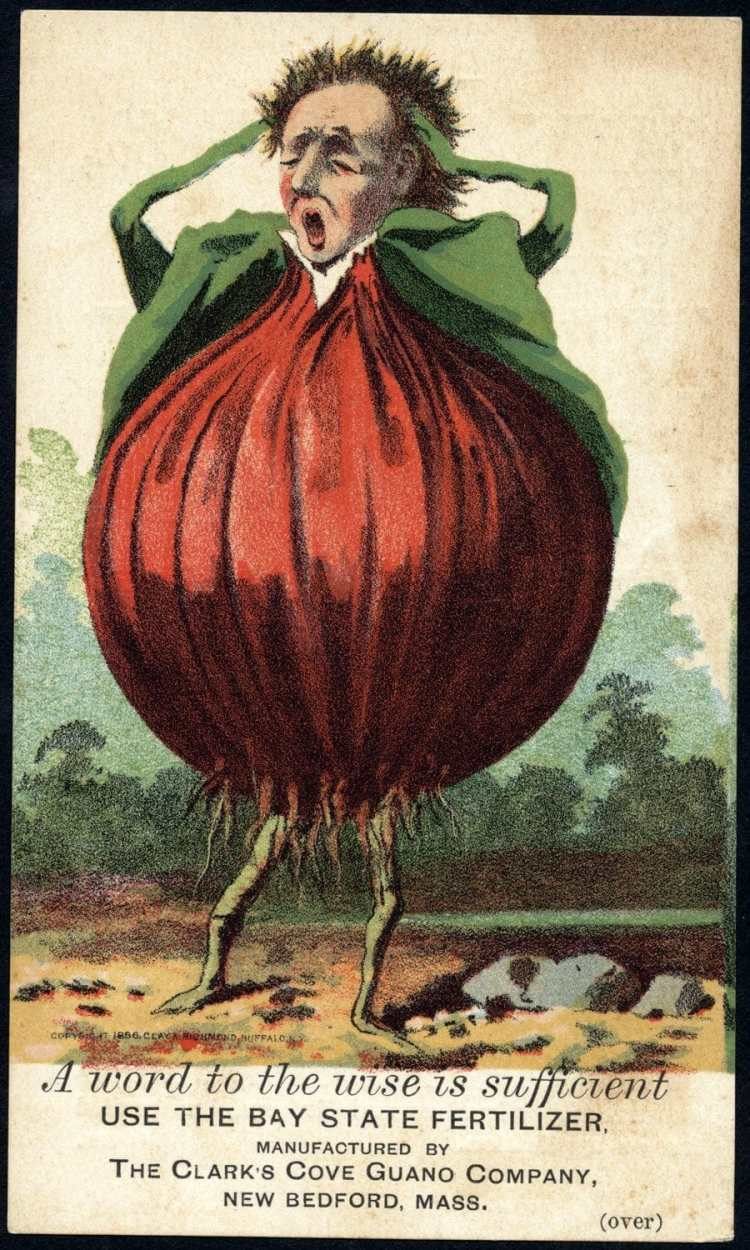 Victorian trade cards with people as vegetables from the 1800s - Man's head on an onion body