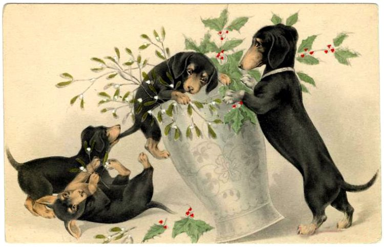Christmas postcards with dogs - Dachshunds
