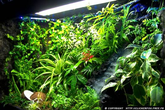 """Résultat de recherche d'images pour """"mon terrarium vivant"""""""