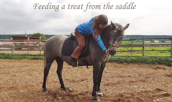 Tips for Clicker Training from the Saddle