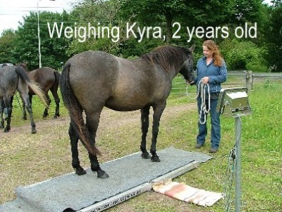 _428kg