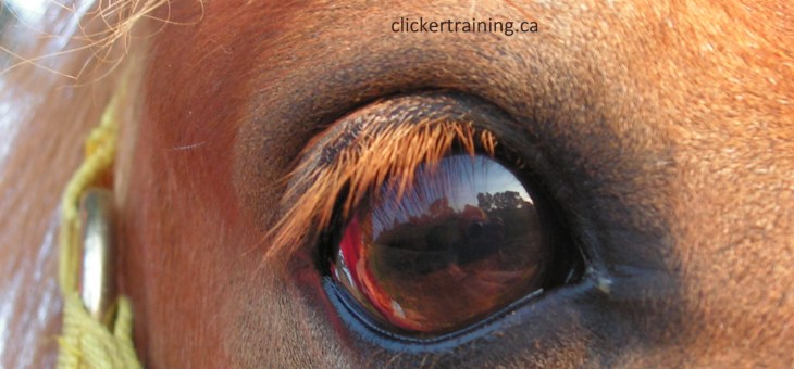 4 Tips to improve your Horse Training Skills