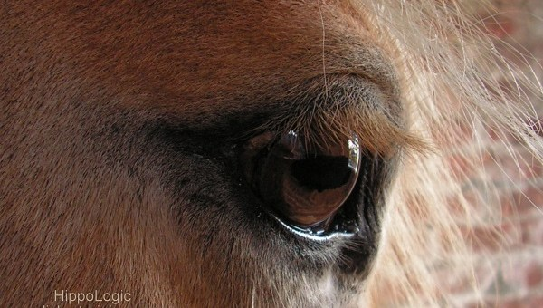 What would you like to see in a horse community?