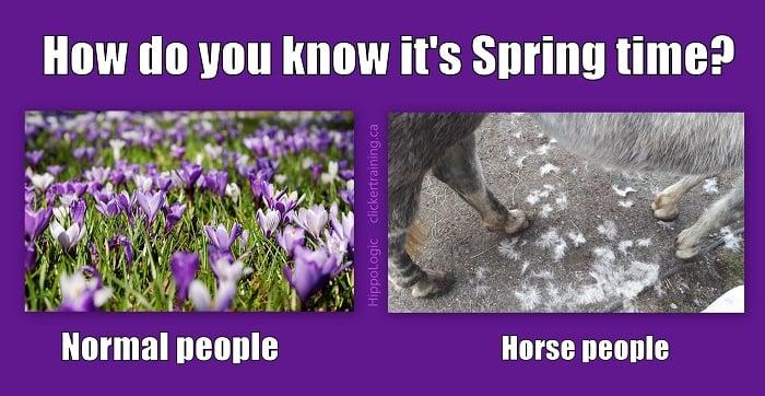 spring_hippologic_meme