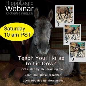 Teach Your Horse to Lie Down