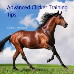 advanced clickertraining tips hippologic