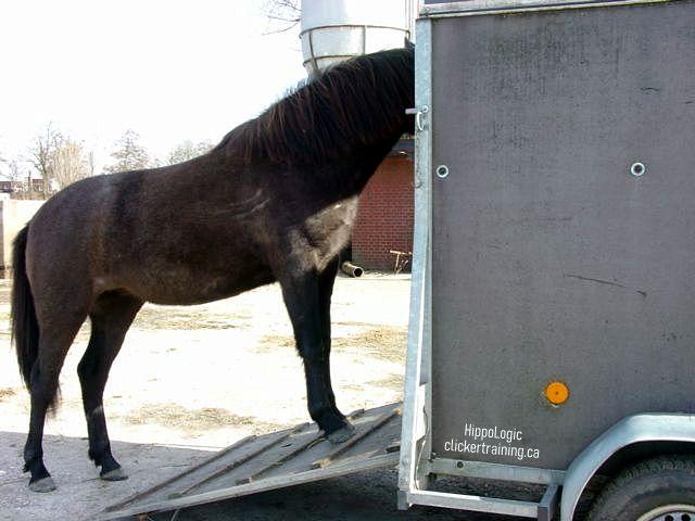 Trailer loading is trailer training.