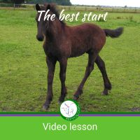 starting a foal or untouched horse with positive reinforcement