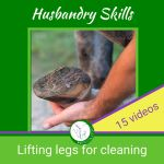 train your horse to lift legs for cleaning hoofs and trimming